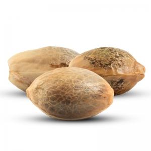 3 darmowe nasiona konopi