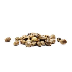 8 darmowych nasion konopi