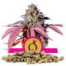 Nasiona Purple Queen, ilość hurtowa