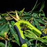 Zakrzywione nożyce do przycinania roślin