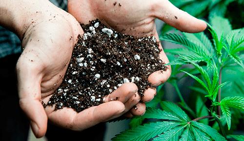Wysterylizuj używaną glebę konopy