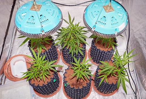 hodowanie marihuany led