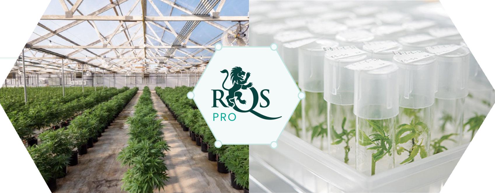 RQS Pro: przewodzimy innowacjom i rozwojowi