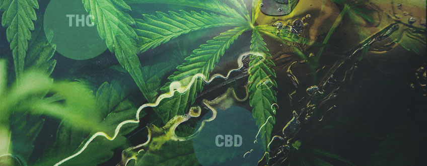 How THC And CBD Are Made: Understanding The Cannabinoid Pathway