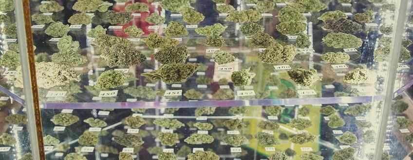 Odmiany RQS nagrodzone w pucharach cannabis