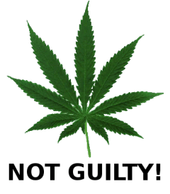 Cannabis not Guilty