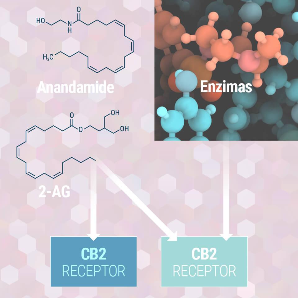 Cannabis as medicine