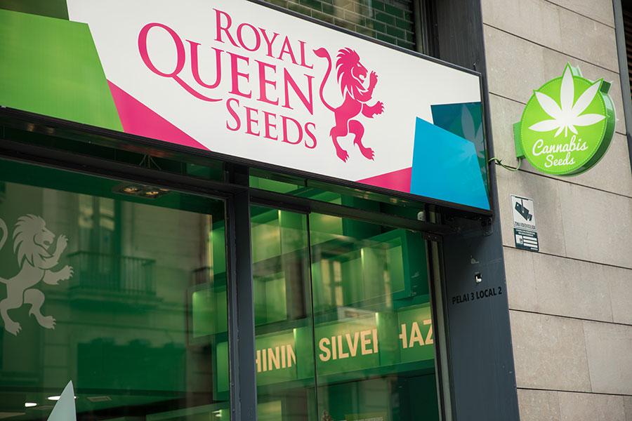 d4e6a4d10 Nasz sklep w Barcelonie będzie oferował hodowcom nasze pierwszorzędne  nasiona konopi od Royal Queen Seeds, jak również różne akcesoria i produkty  Royal ...