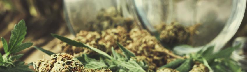 Odstawienie marihuany nie powoduje efektów ubocznych