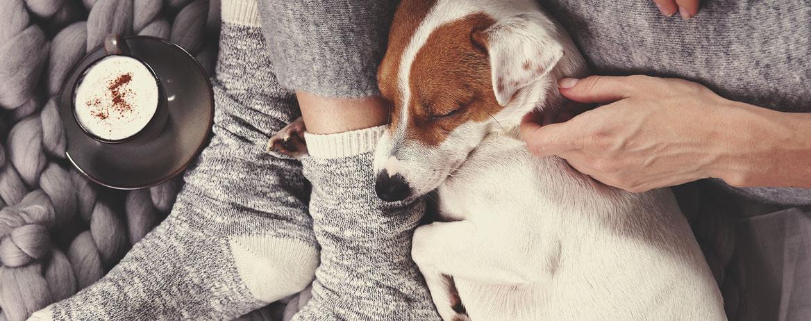 Co zrobić, jeśli Twój pies zje konopie?