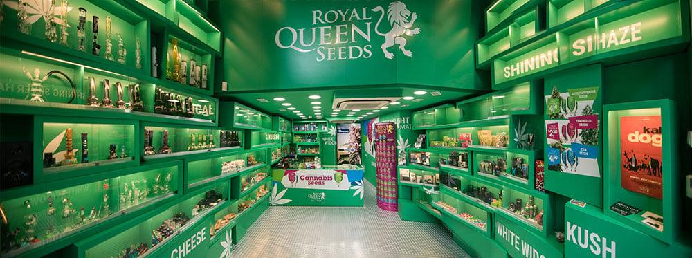 12d61de8c Sklep z Nasionami Konopi w Barcelonie - Royal Queen Seeds