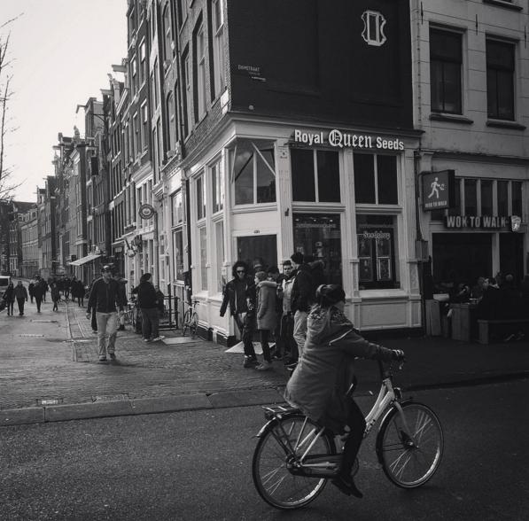 nasiona konopi sklep Amsterdam