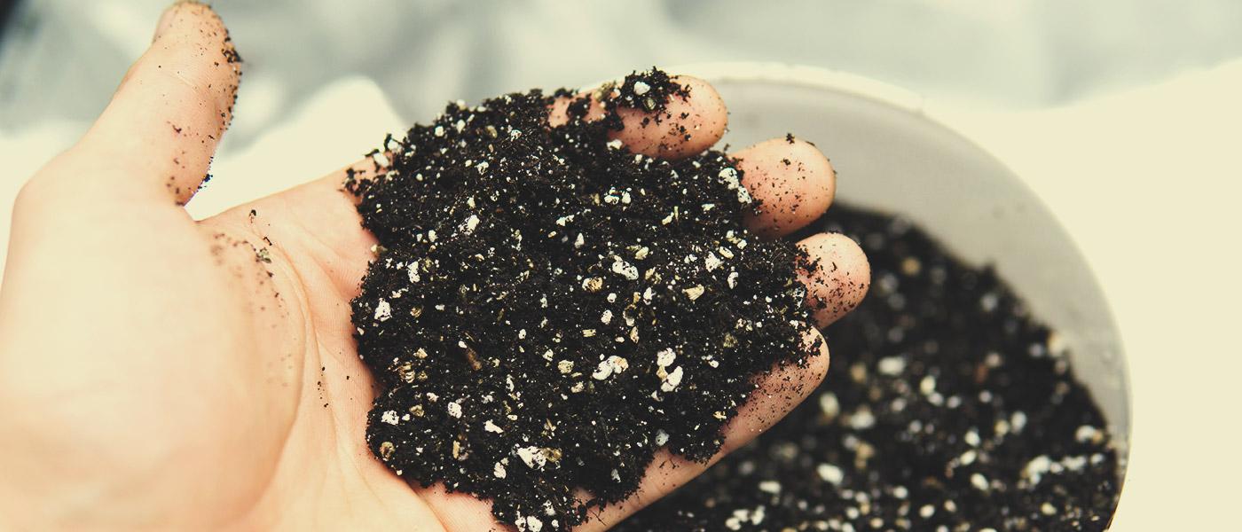 Rodzaj gleby